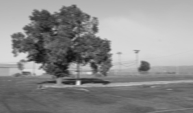 parkinglottreeblur